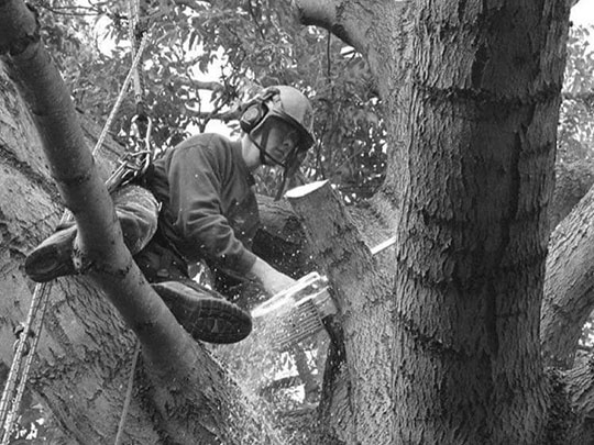 Image of man cutting tree