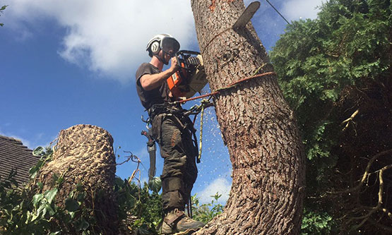 Image of man doing tree removal